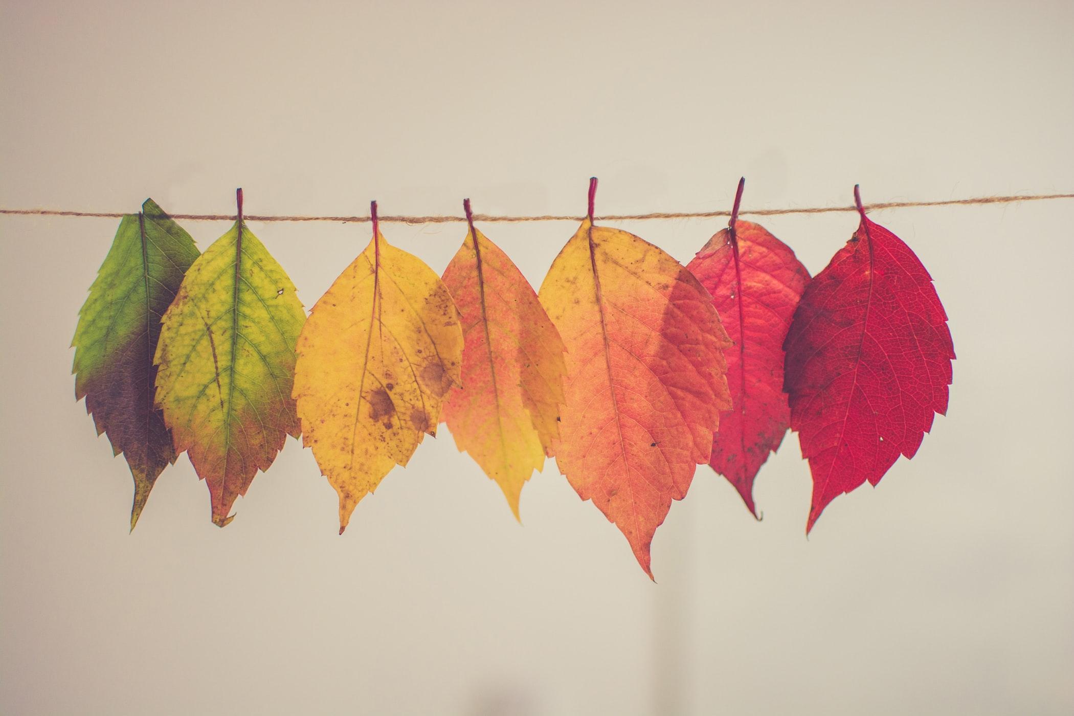 10 Creative DIY Autumn Decoration Ideas